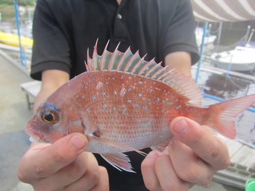 fishi290924 (6).JPG
